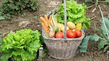 Raccorta di verdure su un giardino
