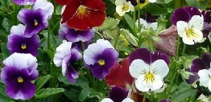 Fiori curati su giardino