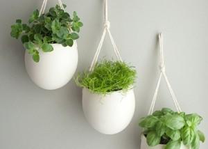 Creare un giardino interno blog edilnet for Giardino zen interno