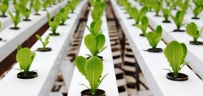 Creare un giardino idroponico
