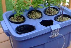 Giardino idroponico