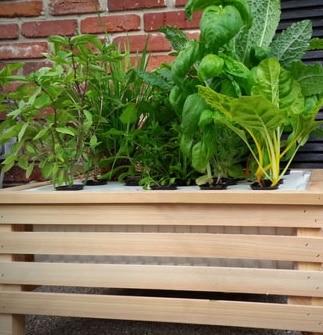 Vaso con piante per Giardino idroponico