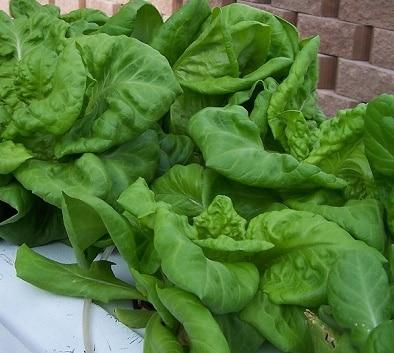 creare un giardino idroponico blog edilnet
