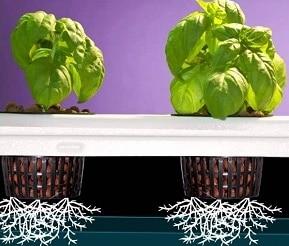 Piante per Giardino idroponico