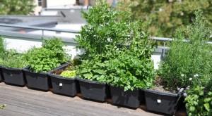 Creare un giardino sul terrazzo - | Blog Edilnet