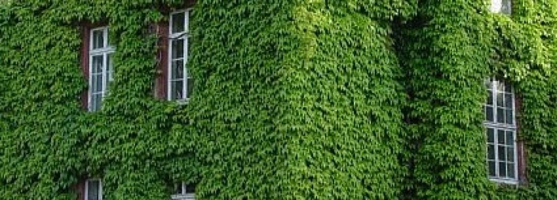 Creare un giardino verticale blog edilnet - Come realizzare un giardino verticale ...