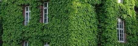 Creare un giardino verticale