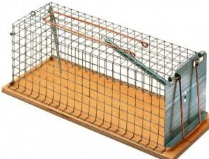 Gabbia come trappola per i topi da casa