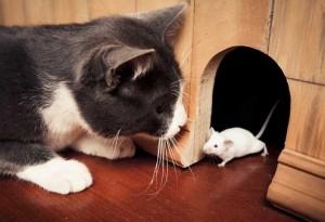 Eliminare i topi da casa4