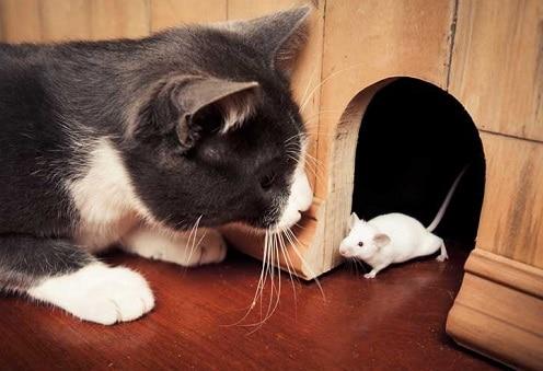 Gatto e topo in casa