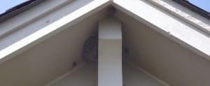Tenere lontane le vespe da casa
