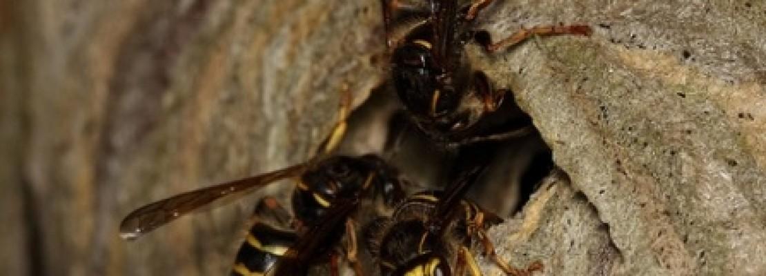 Come tenere lontane le formiche con 5 rimedi naturali