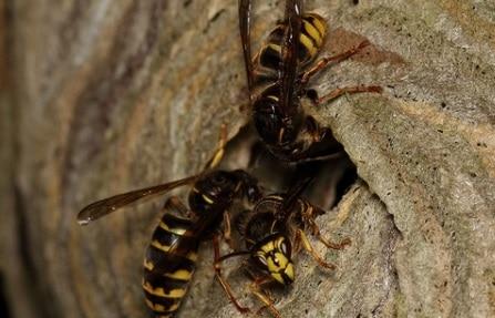 Come tenere lontane le vespe da casa