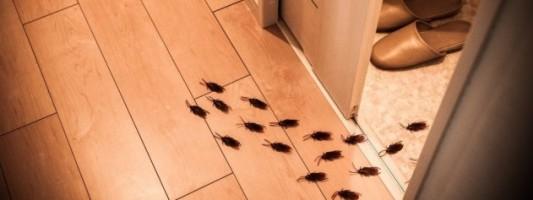 scarafaggi in casa come eliminarli