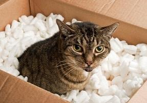 traslocare con animali
