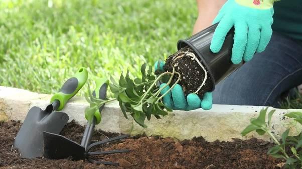 Dei guanti da giardinaggio per donna.