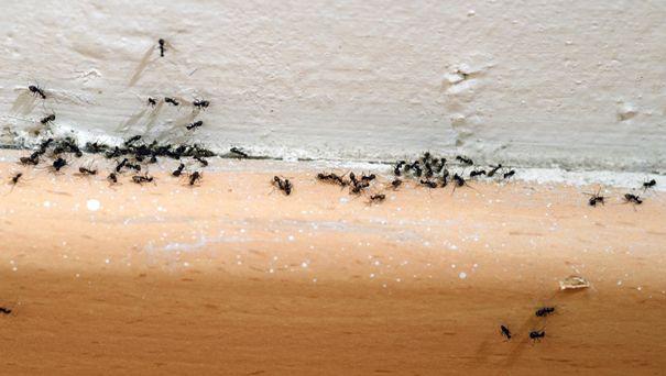 le formiche si annidano in fessure e interstizi.