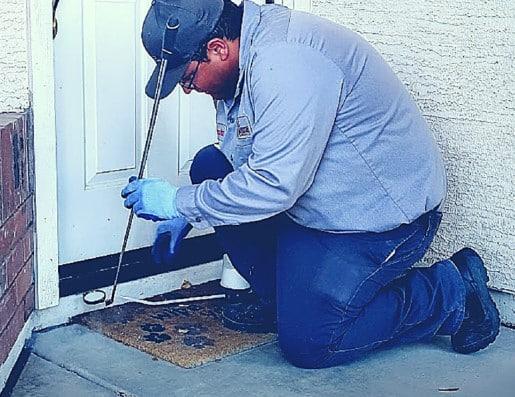 Una disinfestazione per eliminare gli scorpioni in casa.